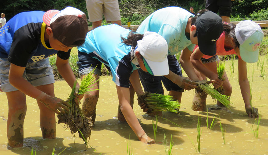 Images of Scene from a rice-planting experience