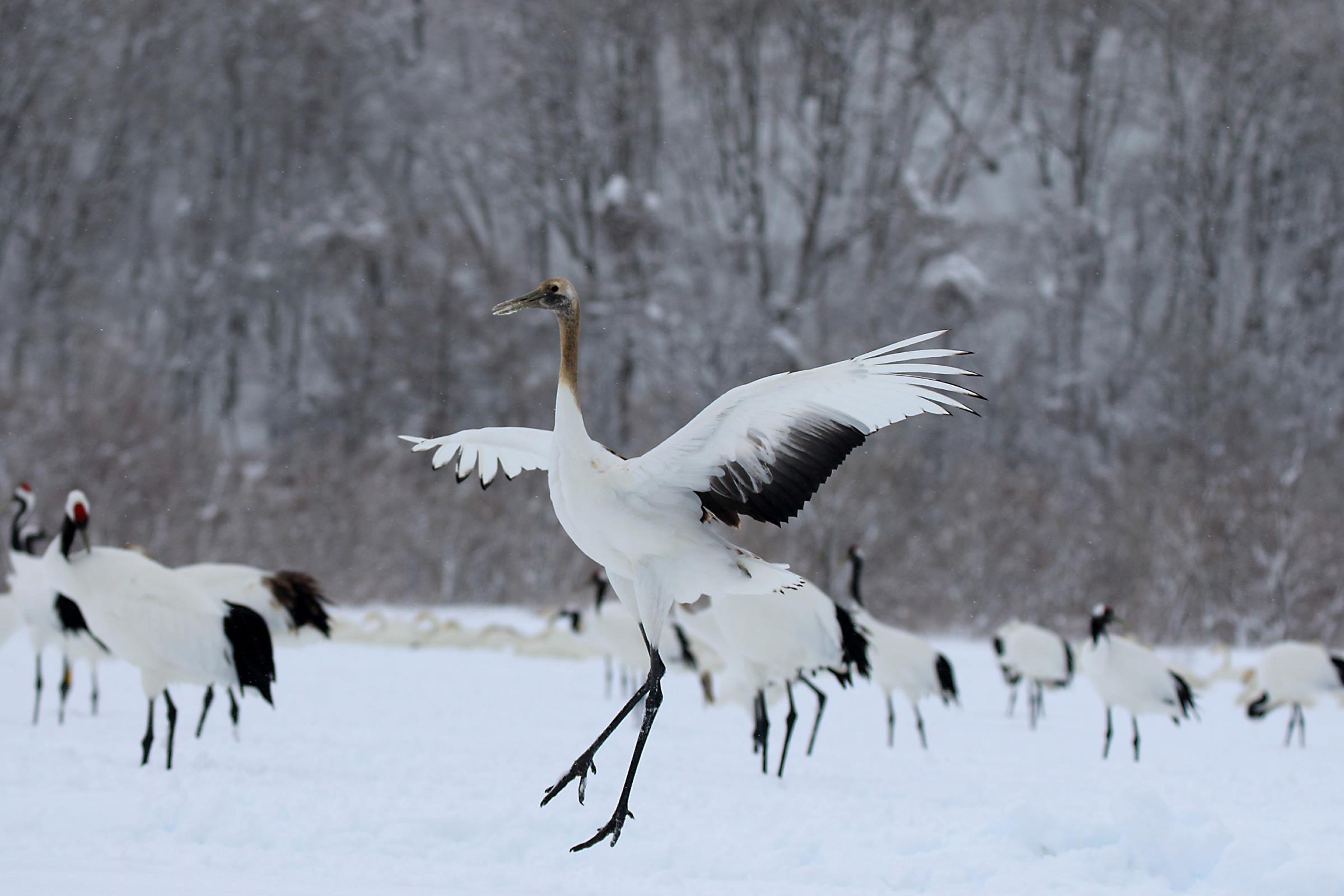 canon bird branch project biodiversity initiatives bird photo