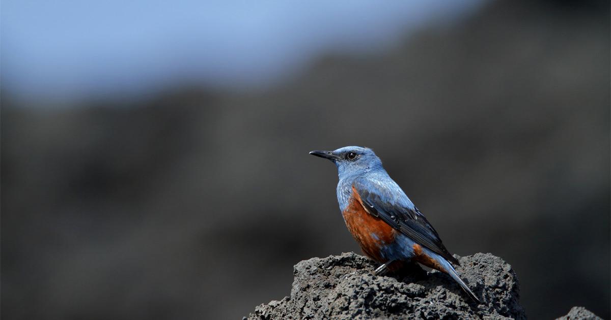 野鳥写真図鑑